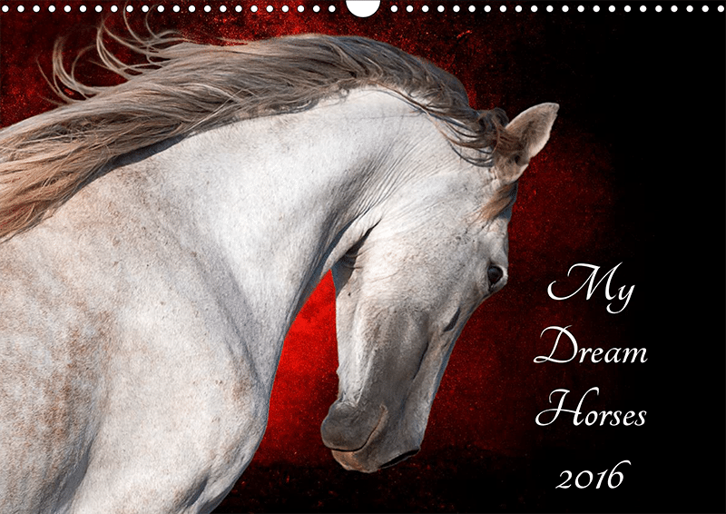 My Dream Horses 2016