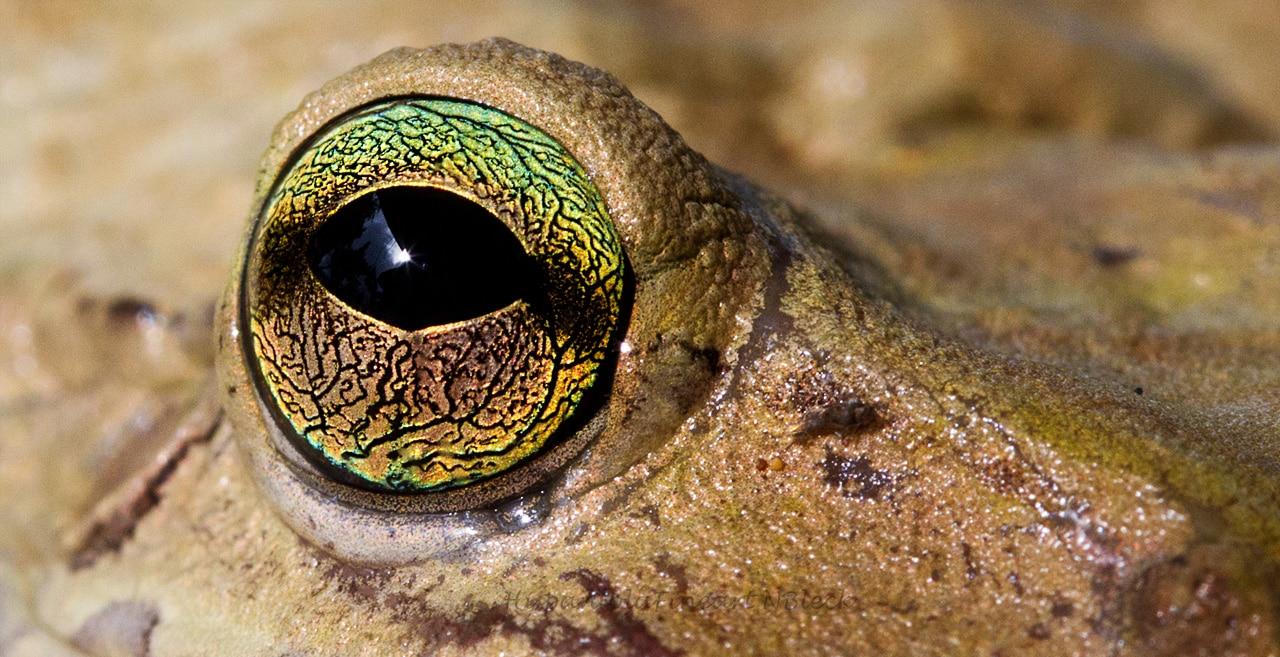 Reptilien / Amphibien