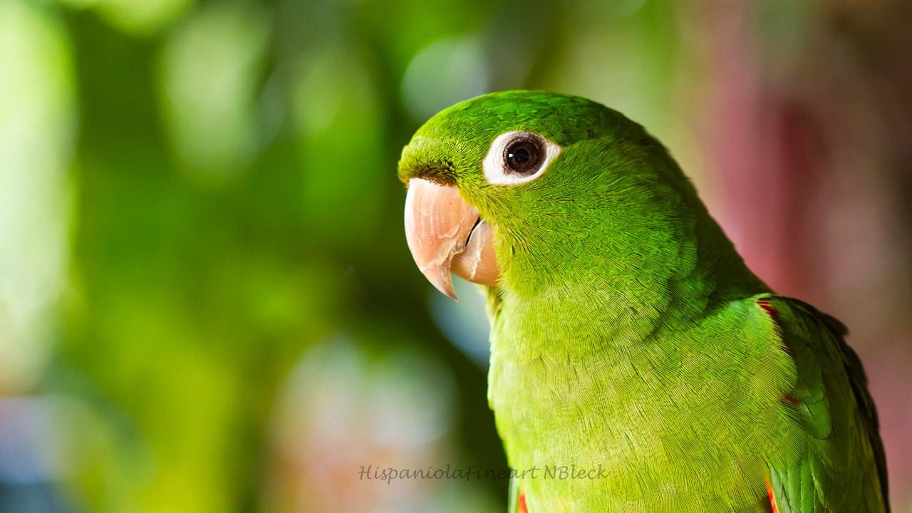 Vögel Allgemein