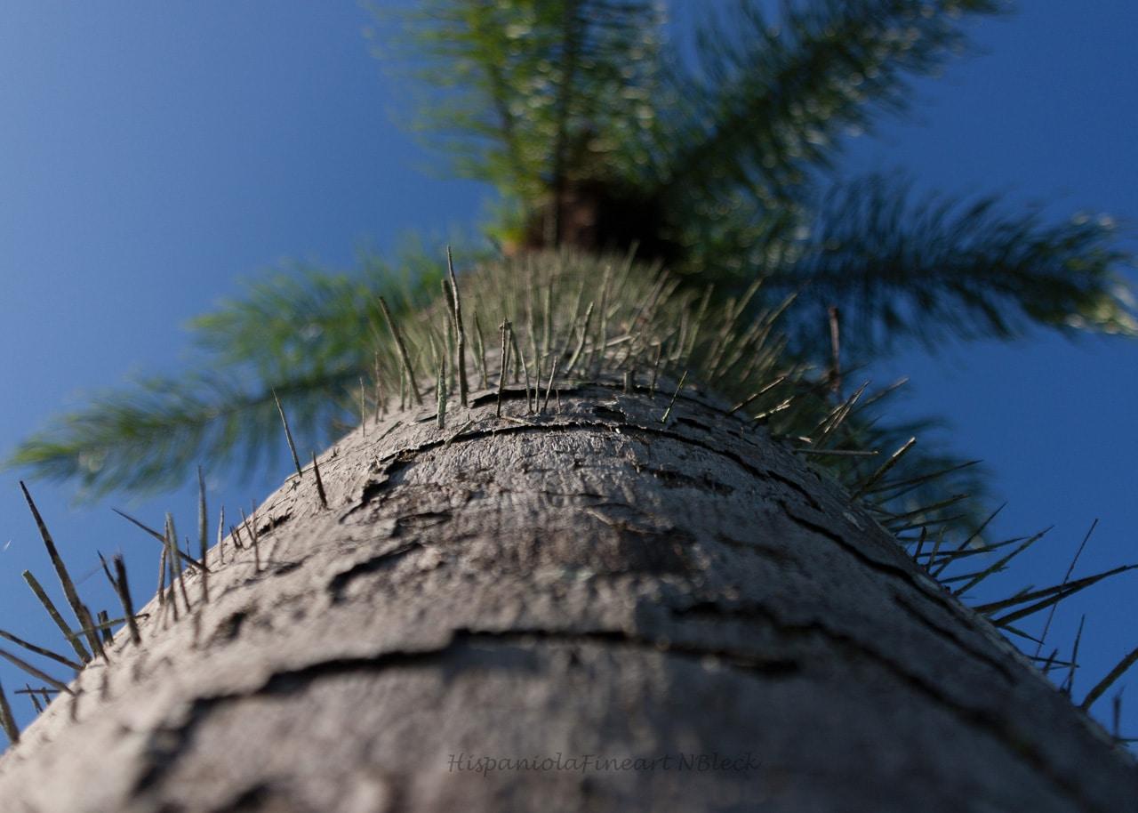 Bäume / Palmen